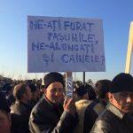 ciobanii-reiau-protestele